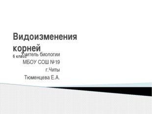 Видоизменения корней 6 класс Учитель биологии МБОУ СОШ №19 г.Читы Тюменцева Е