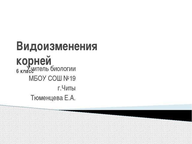 Видоизменения корней 6 класс Учитель биологии МБОУ СОШ №19 г.Читы Тюменцева Е...