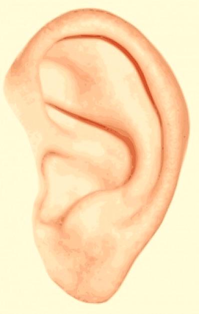 http://static.freepik.com/free-photo/human-ear-clip-art_421267.jpg