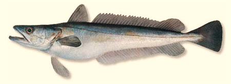 http://o-ribkah.ru/Fishes_files/hek.jpg