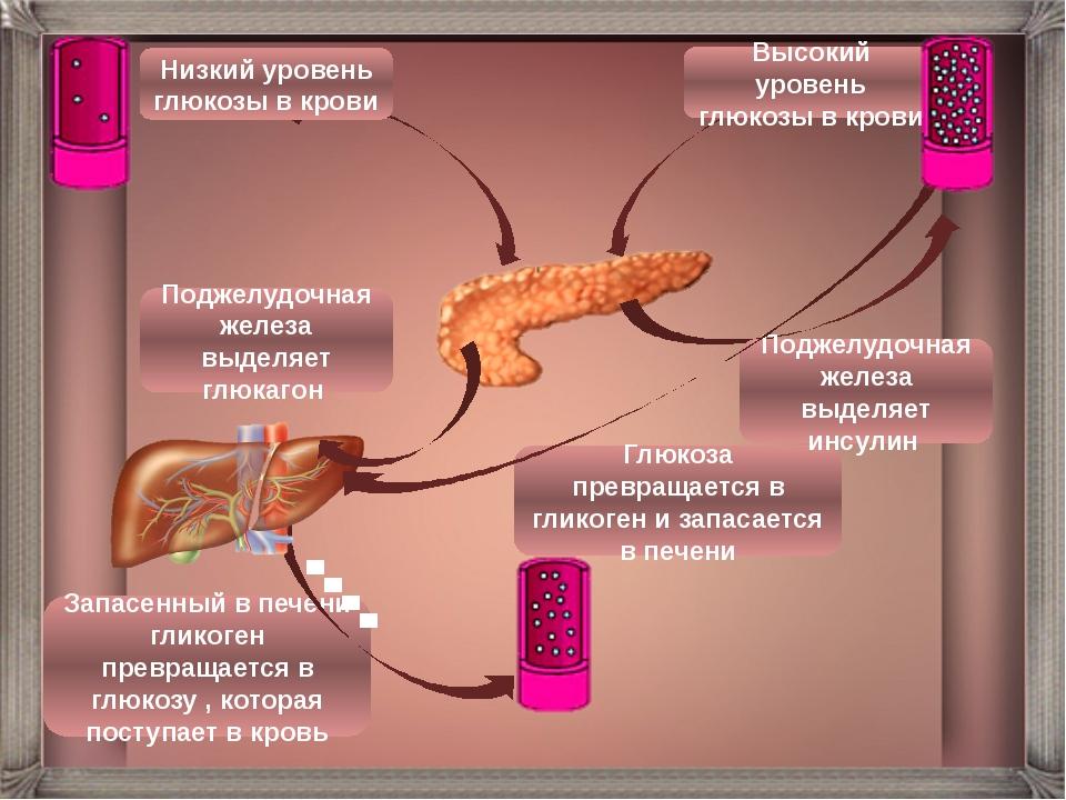 Низкий уровень глюкозы в крови Высокий уровень глюкозы в крови Поджелудочная...