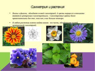Симметрия и растения Виолы и фиалки, обладают осевой симметрией. А цветы нарц