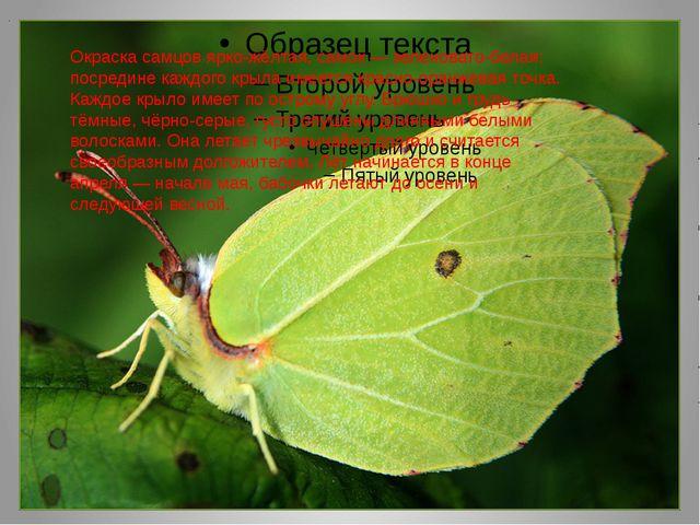 . Окраска самцов ярко-жёлтая, самок — зеленовато-белая; посредине каждого кр...