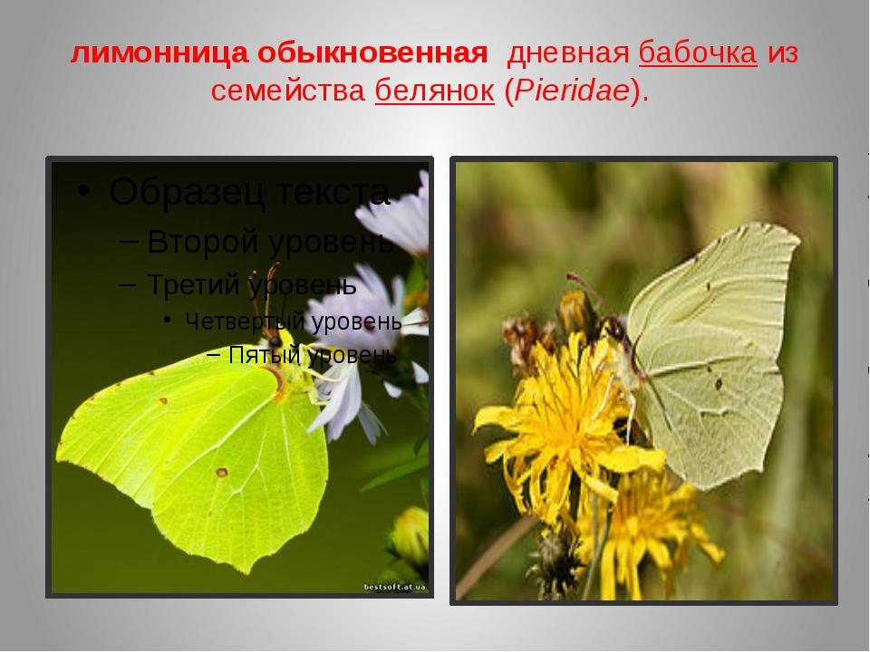 лимонница обыкновенная дневная бабочкаиз семействабелянок(Pieridae).