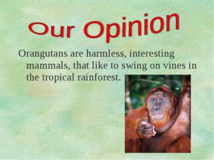 Orangutans are harmless, interesting mammals, that like to swing on vines in