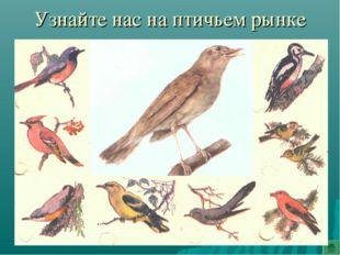 Узнайте нас на птичьем рынке