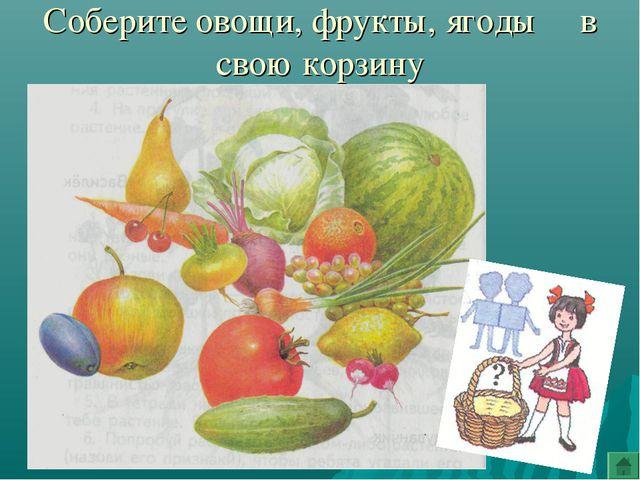 Соберите овощи, фрукты, ягоды в свою корзину