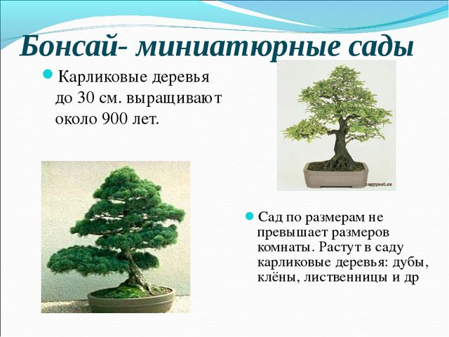 Бонсай- миниатюрные сады Карликовые деревья до 30 см. выращивают около 900 ле...