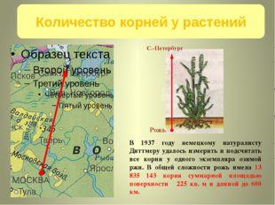Москва С.-Петербург 600 км Рожь В 1937 году немецкому натуралисту Диттмеру у