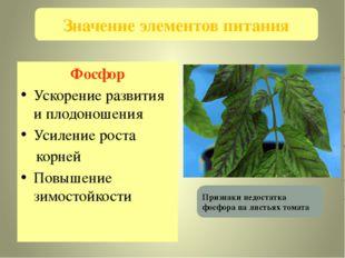 Фосфор Ускорение развития и плодоношения Усиление роста корней Повышение зимо