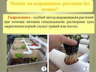 Можно ли выращивать растения без почвы? Гидропоника - особый метод выращивани