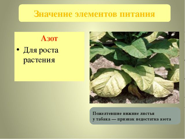 Азот Для роста растения Значение элементов питания Пожелтевшие нижние листья...