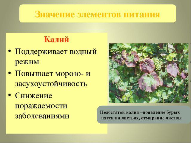 Калий Поддерживает водный режим Повышает морозо- и засухоустойчивость Снижени...