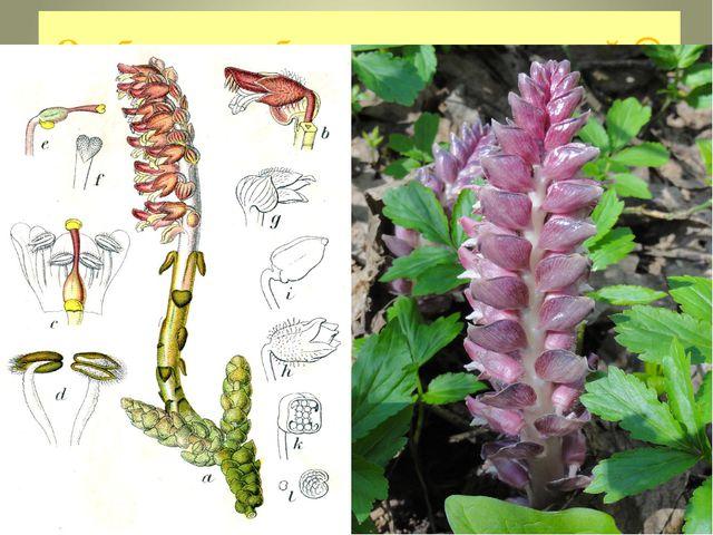 Особые способы питания растений  Хищные растения вынуждены так питаться из-з...