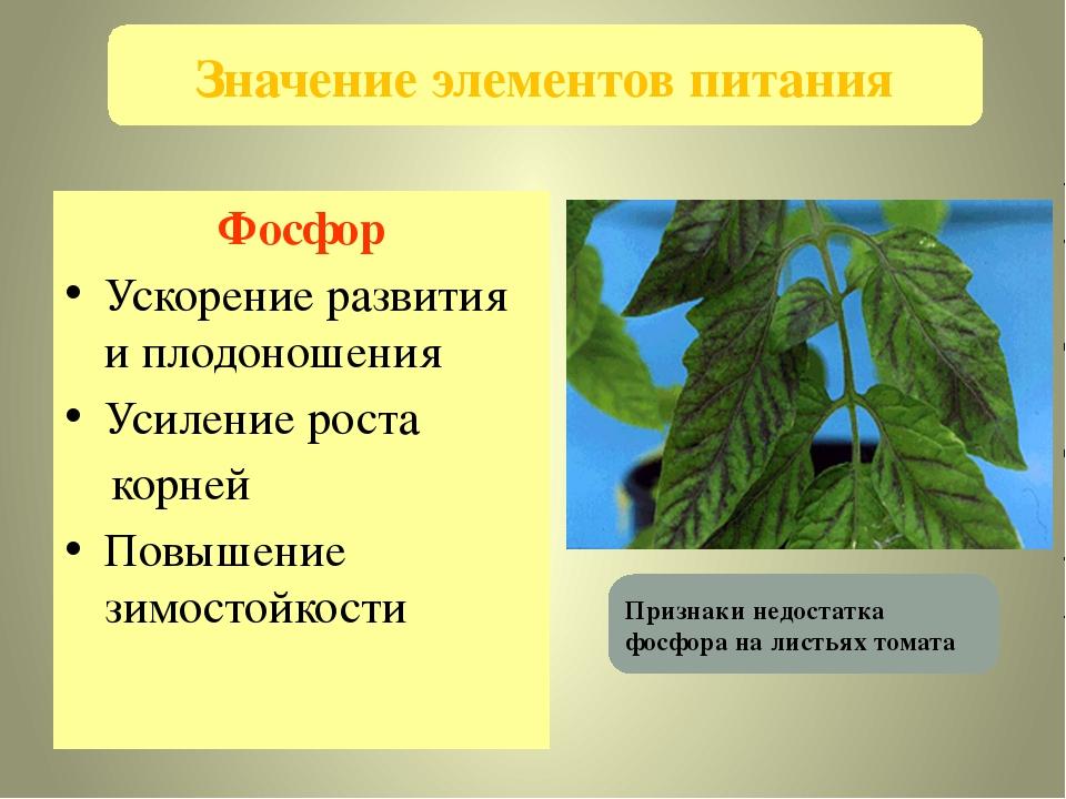 Фосфор Ускорение развития и плодоношения Усиление роста корней Повышение зимо...