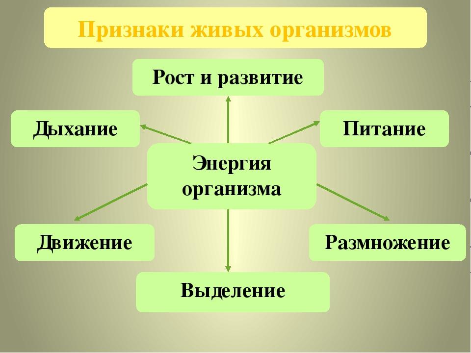 Признаки живых организмов Энергия организма Движение Выделение Размножение Пи...