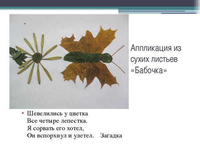 Аппликация из сухих листьев «Бабочка» Шевелились у цветка Все четыре лепестка...