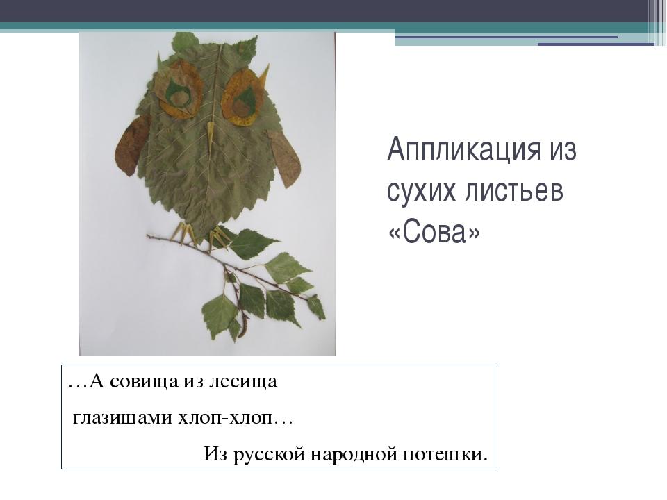 Аппликация из сухих листьев «Сова» …А совища из лесища глазищами хлоп-хлоп… И...