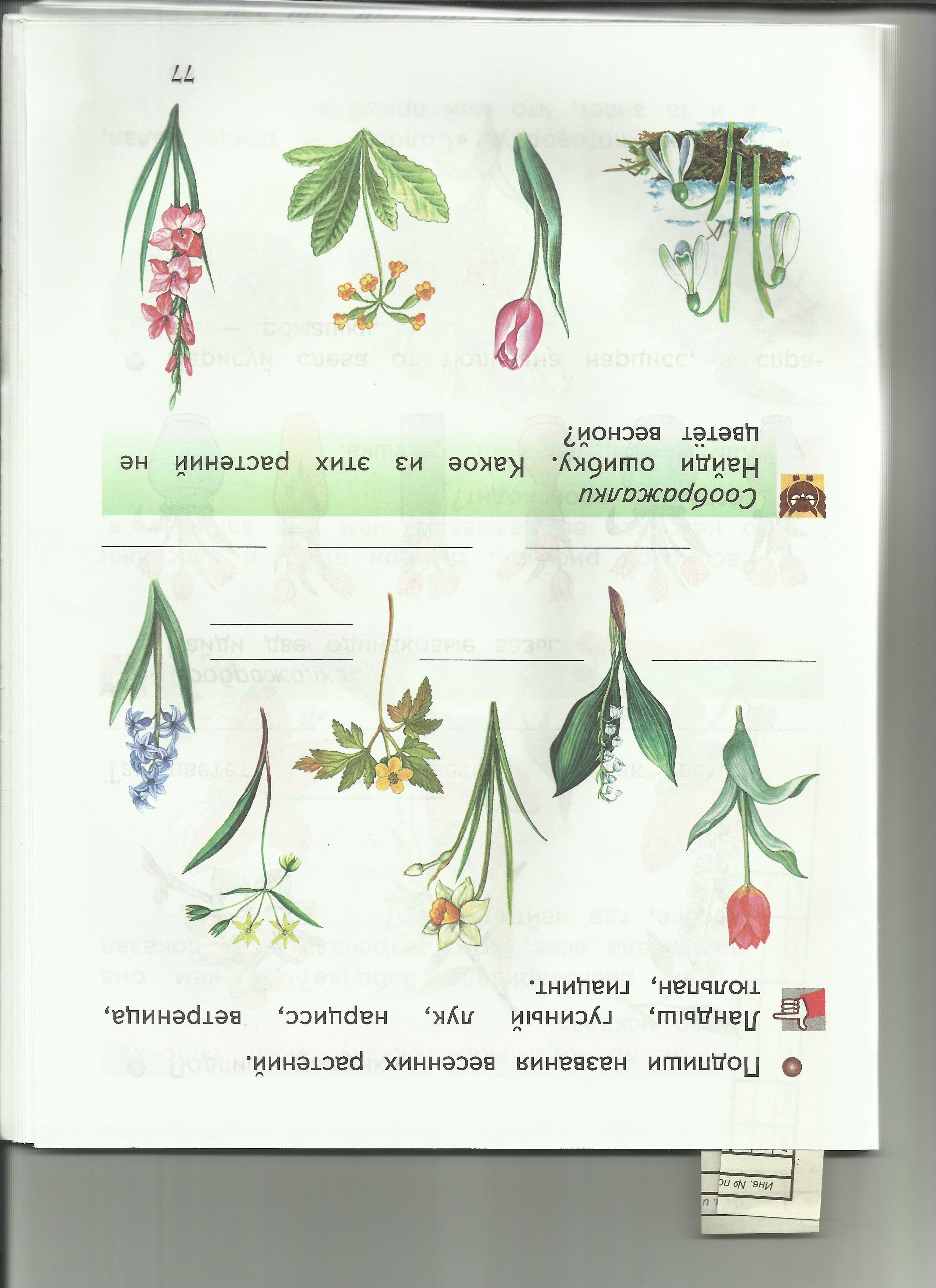 C:\Users\пр\Desktop\папка растения 8\8какое растение не цветёт весной.jpg