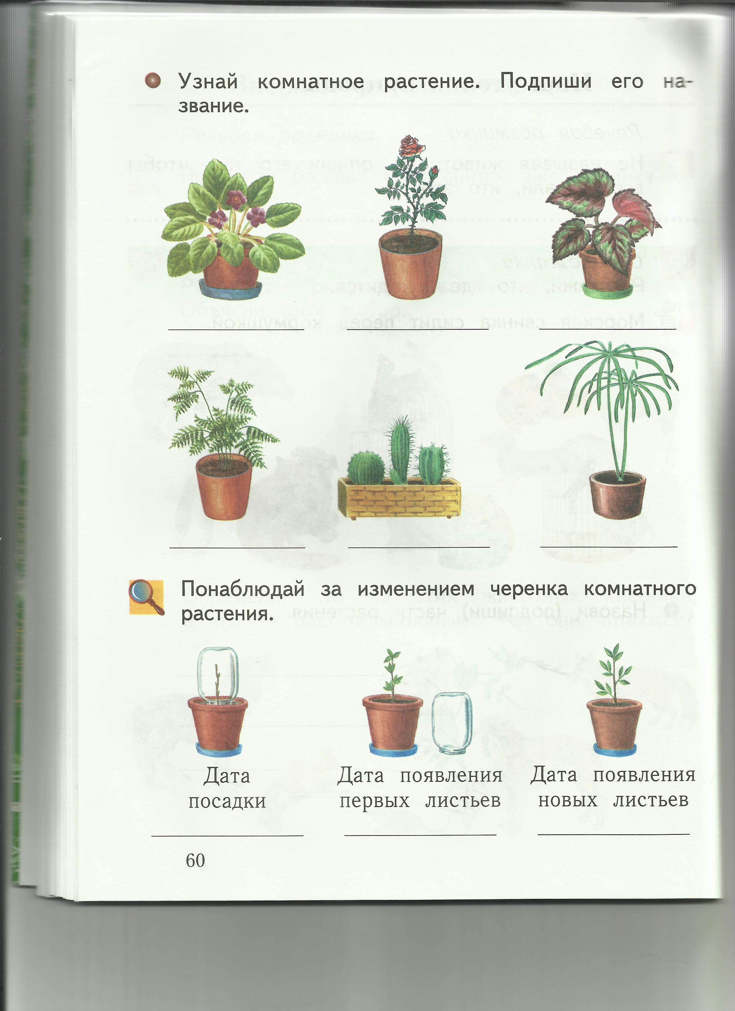 C:\Users\пр\Desktop\папка растения 8\8узнай растение.jpg