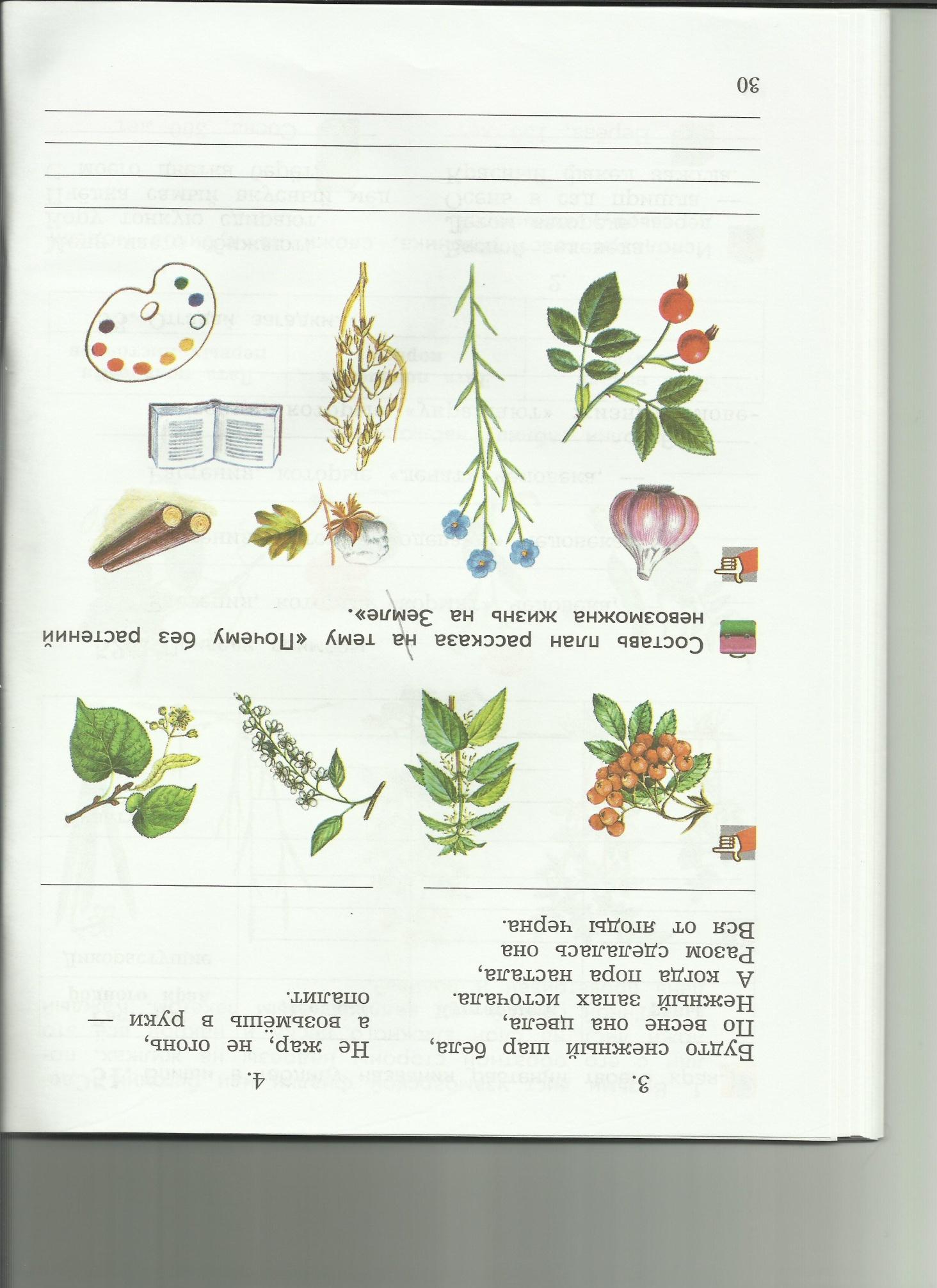 C:\Users\пр\Desktop\папка растения 8\8стихи.jpg