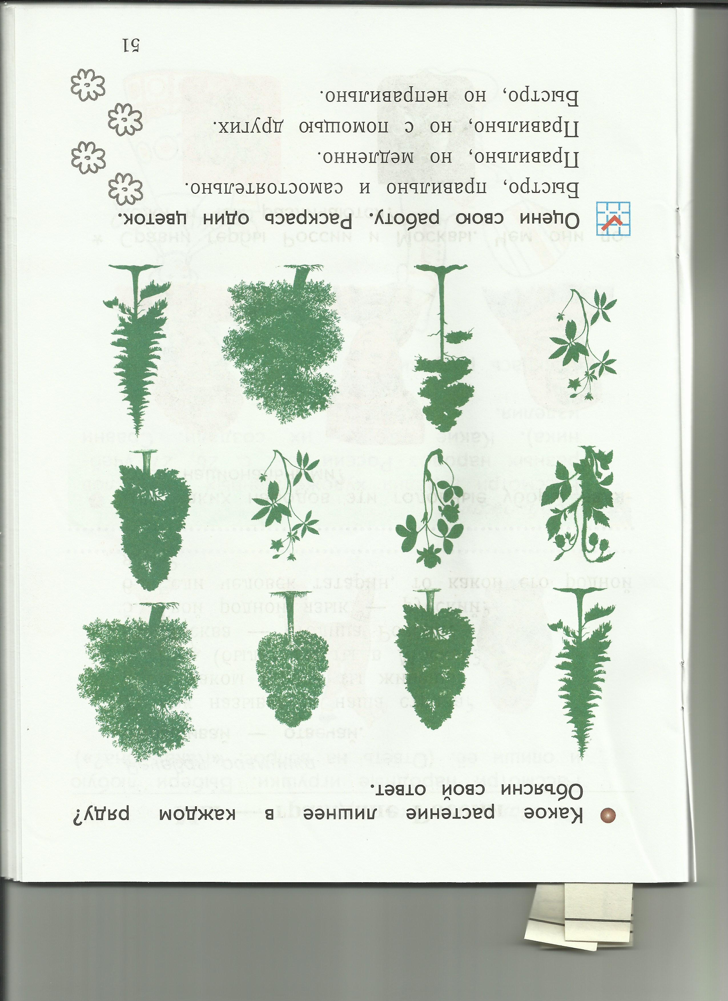C:\Users\пр\Desktop\папка растения 8\8лишнее.jpg