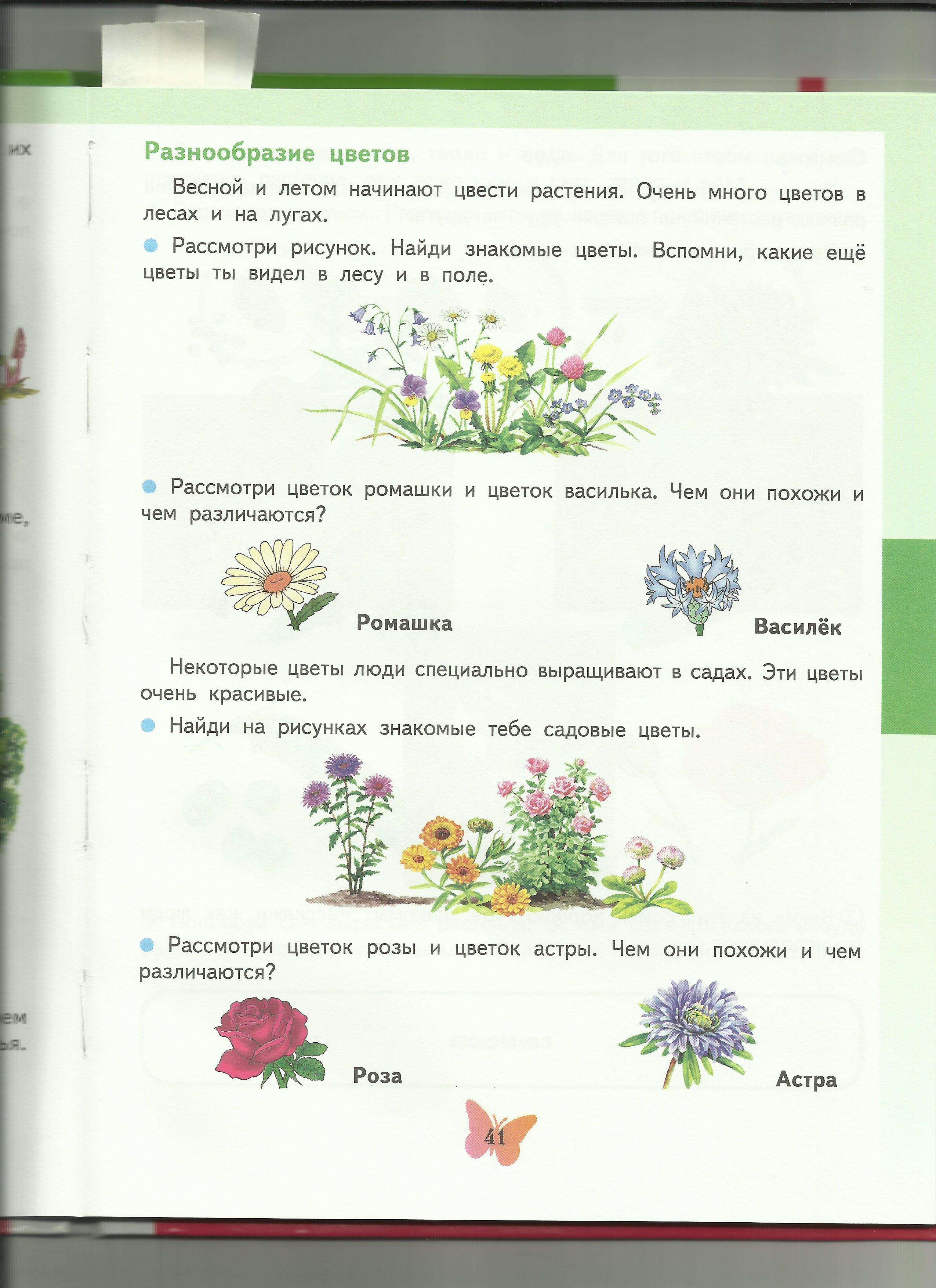 C:\Users\пр\Desktop\папка растения7\разнообразие цветов.jpg