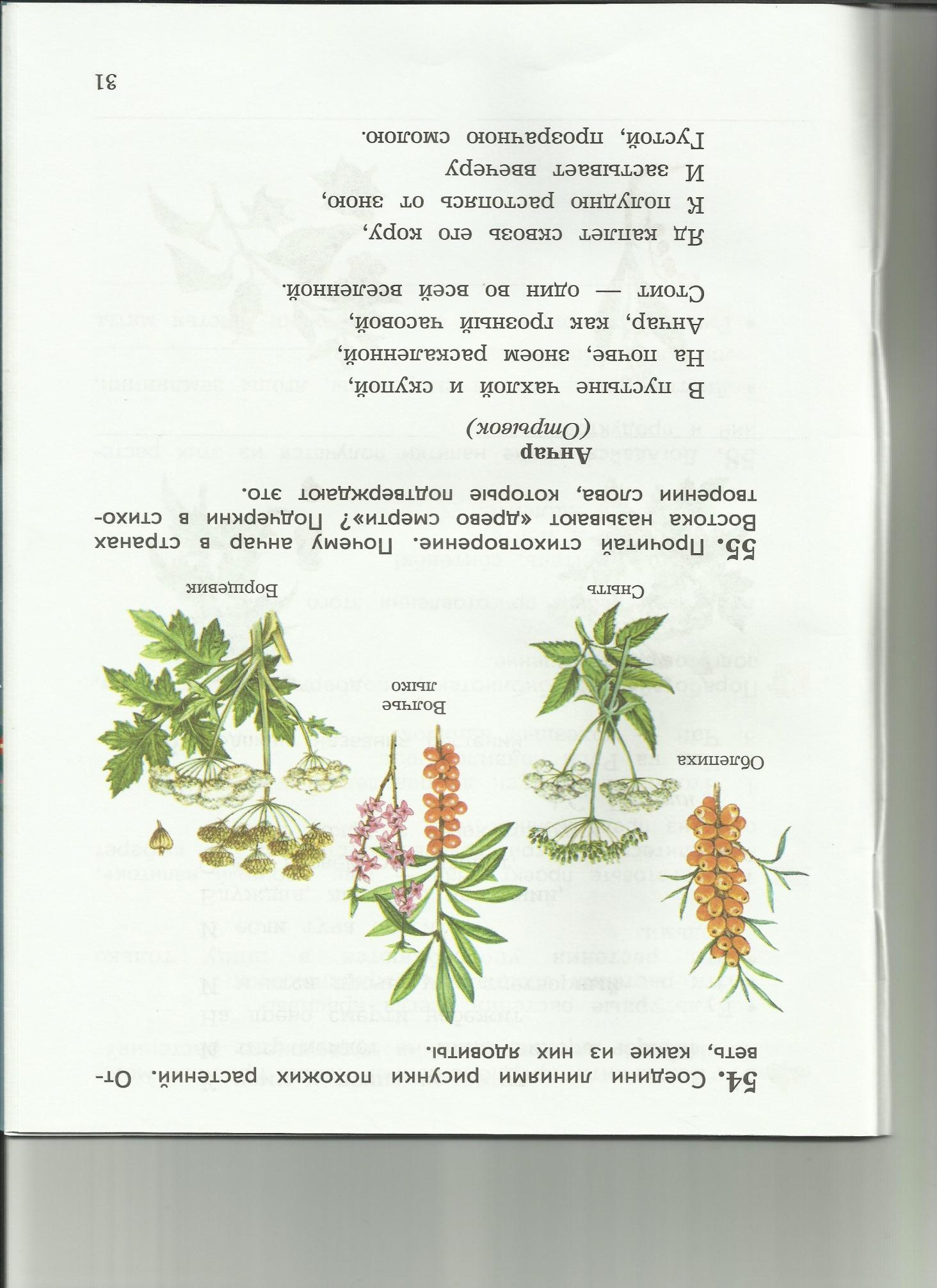 C:\Users\пр\Desktop\папка растения 8\8-1.jpg