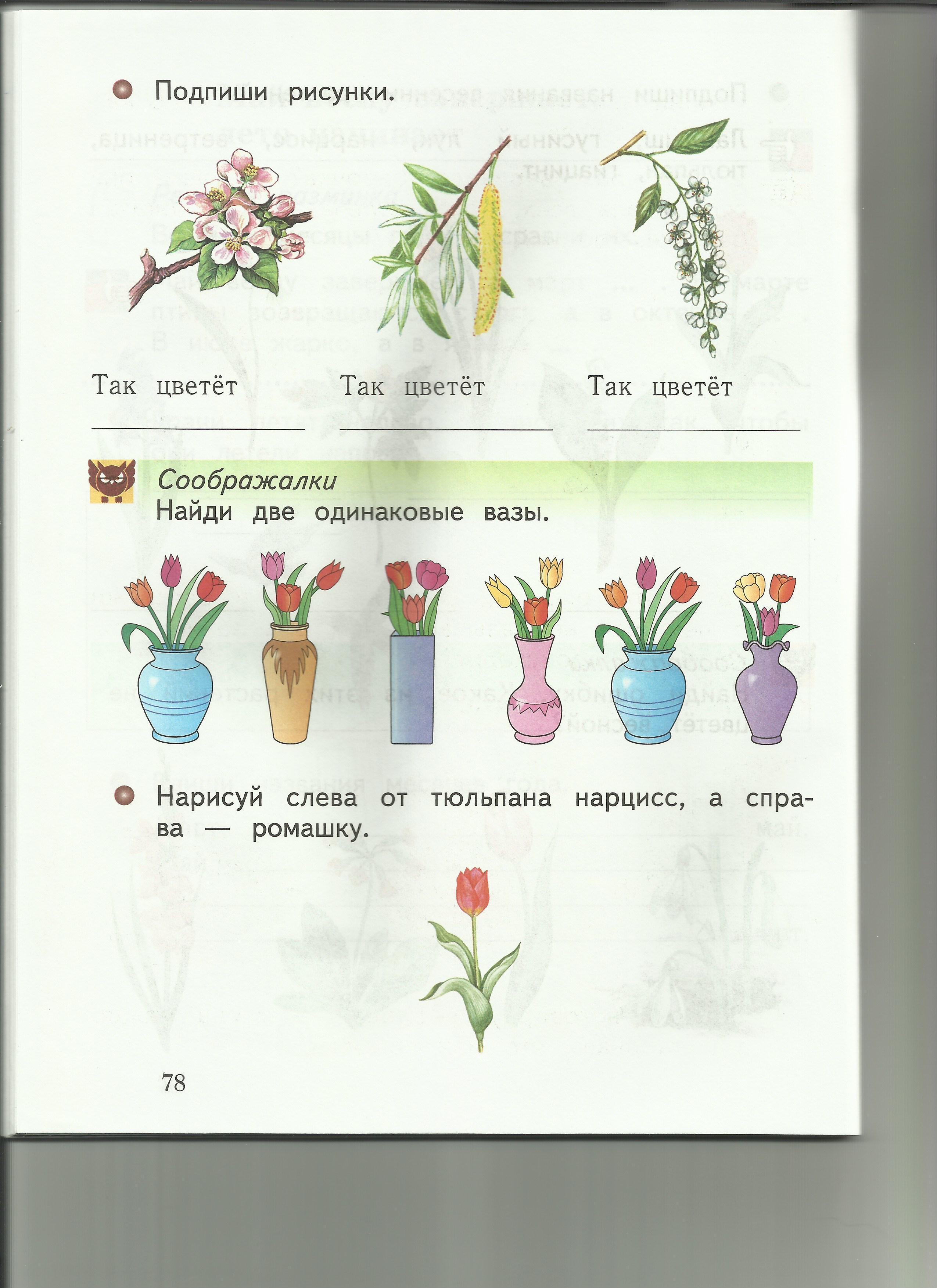 C:\Users\пр\Desktop\папка растения 8\8подпиши рисунки.jpg