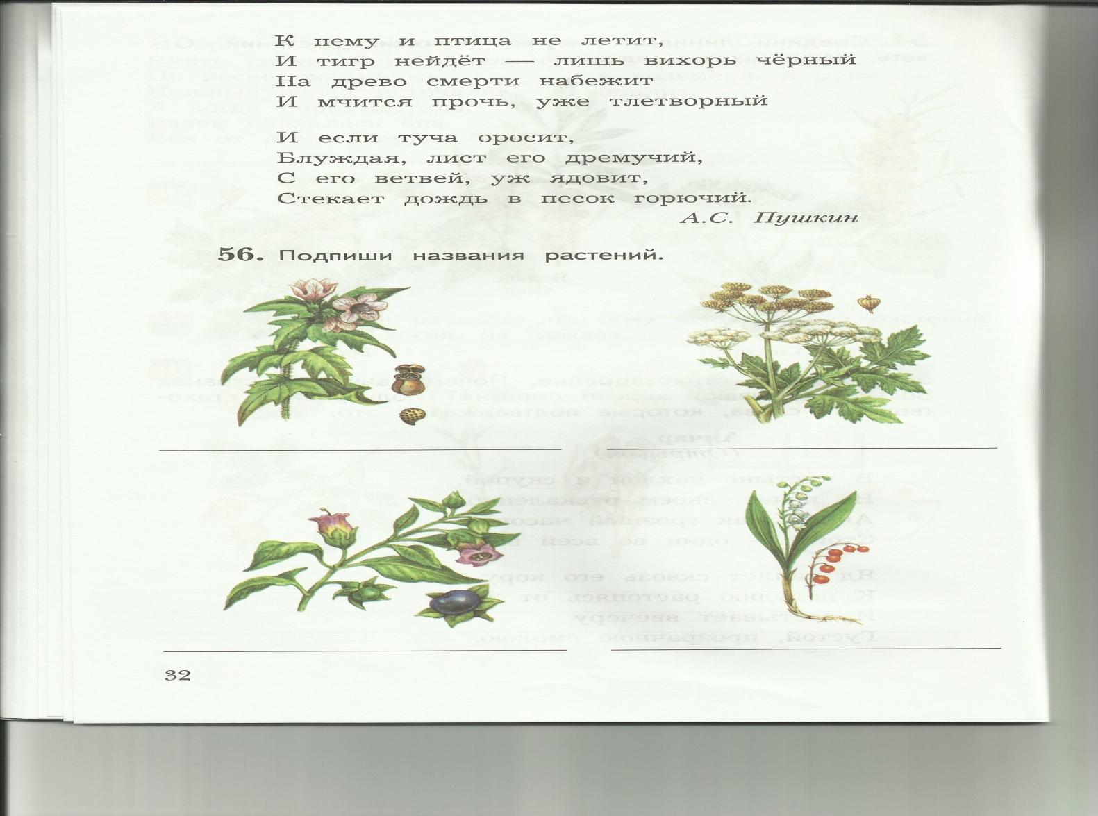 C:\Users\пр\Desktop\папка растения 8\8-2.jpg