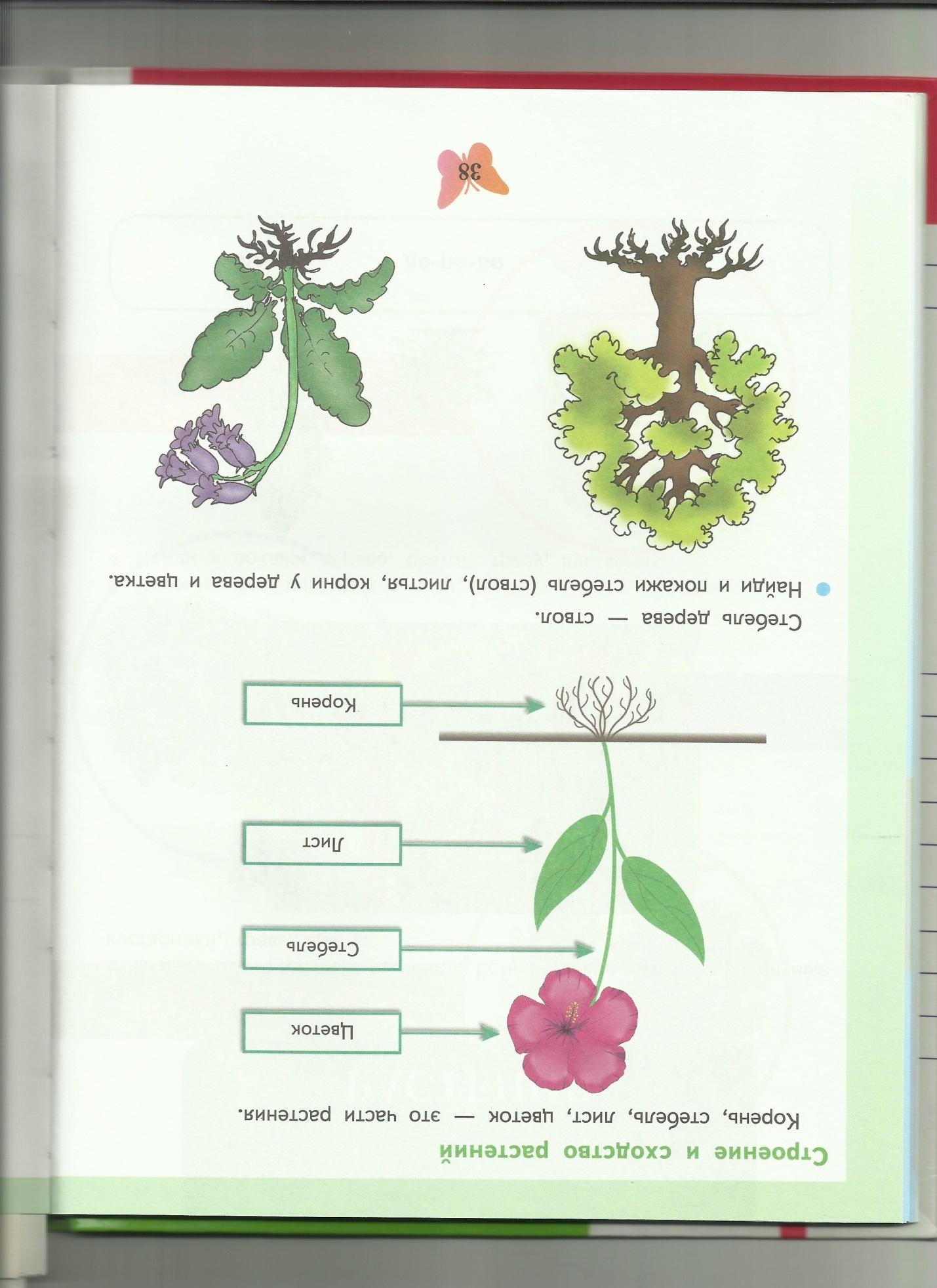 C:\Users\пр\Desktop\папка растения 8\строение и сходство растений.jpg