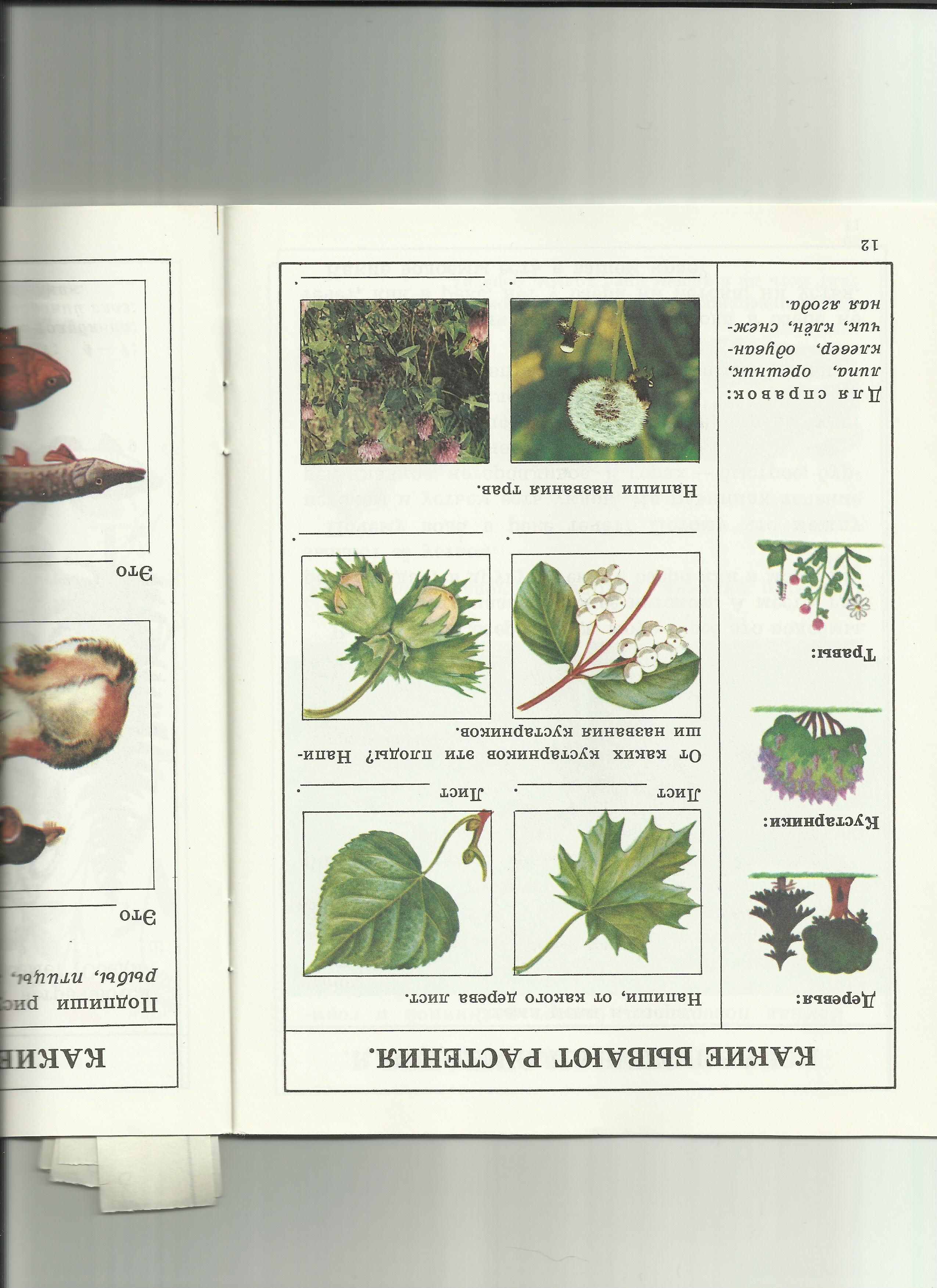 C:\Users\пр\Desktop\папка растения 8\8какие бывают растения.jpg