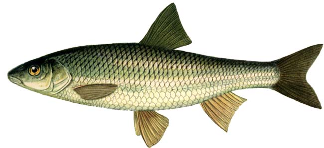 http://fishline.ru/wp-content/uploads/2009/04/elezc.jpg