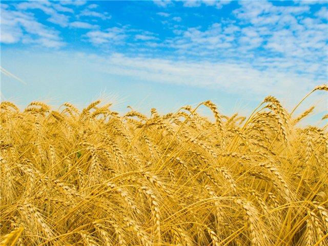 http://board.agrobiznes.com.ua/photos/2013/07/5377.jpg
