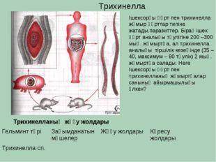 Трихинелла Трихинелланың жұғу жолдары Ішексорғы құрт пен трихинелла жұмыр құр