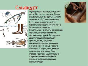 Суырқұрт Жұмыр құрттардың қылқұртқа ұқсас бір түрі - суыртқы. Оның аналығының