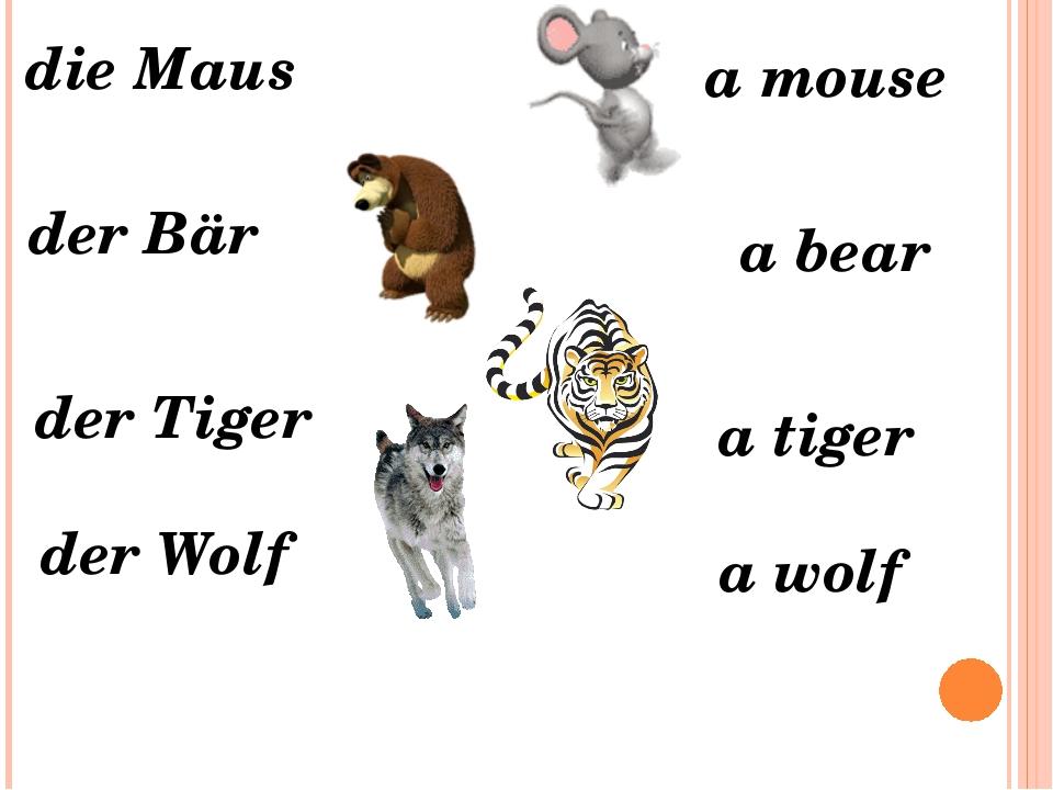 die Maus der Wolf der Tiger der Bär a mouse a bear a tiger a wolf
