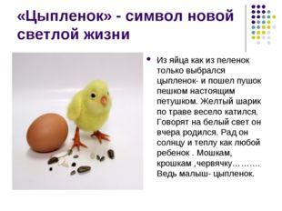 «Цыпленок» - символ новой светлой жизни Из яйца как из пеленок только выбралс