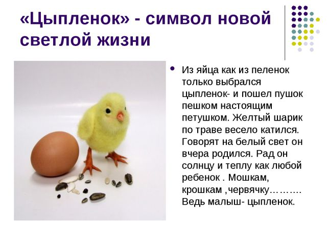«Цыпленок» - символ новой светлой жизни Из яйца как из пеленок только выбралс...