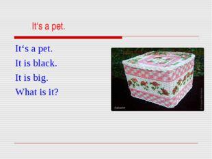 It's a pet. It's a pet. It is black. It is big. What is it?