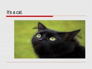 It's a cat.