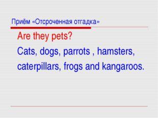 Приём «Отсроченная отгадка» Are they pets? Cats, dogs, parrots , hamsters, ca