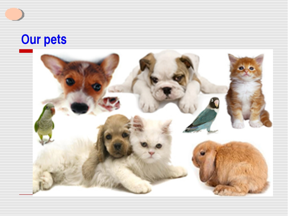Our pets