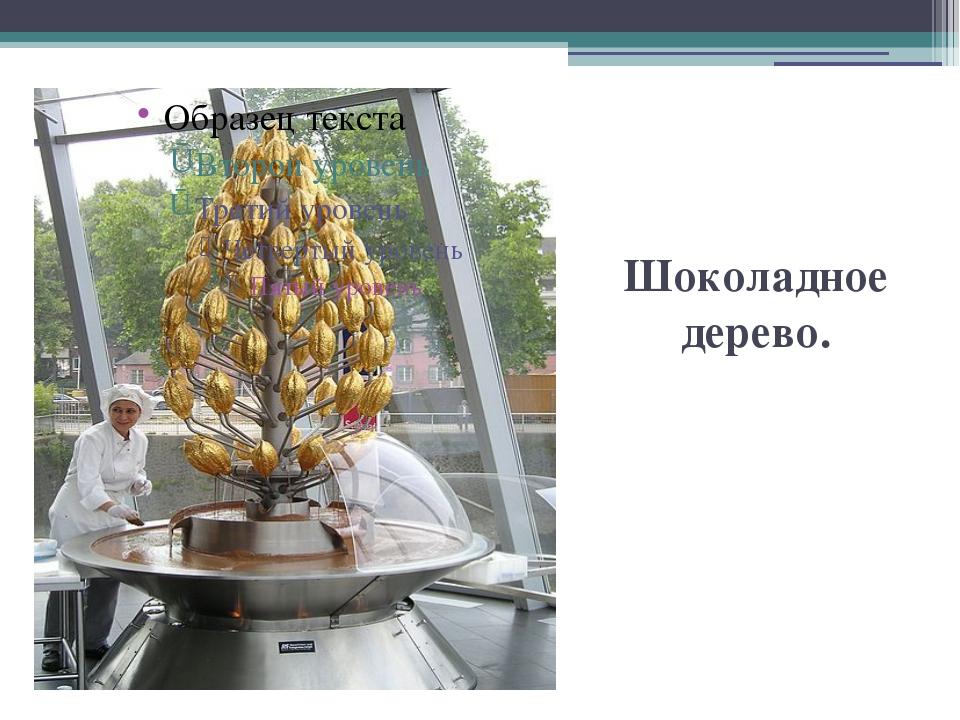 Шоколадное дерево.