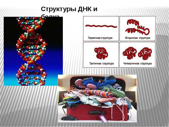 Структуры ДНК и белка