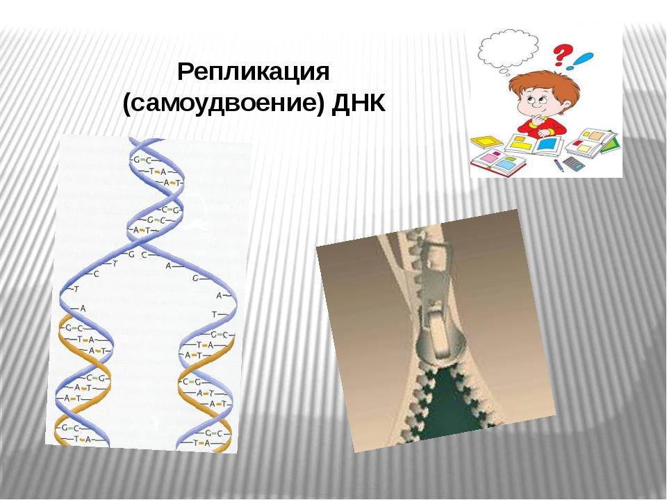 Репликация (самоудвоение) ДНК