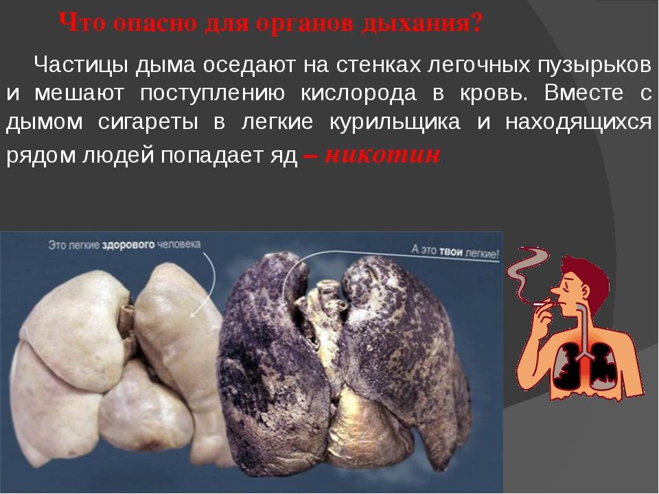 Что опасно для органов дыхания? Частицы дыма оседают на стенках легочных пузы...