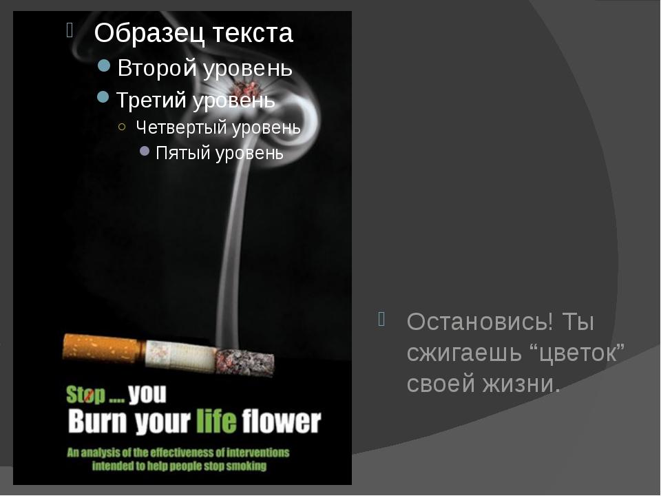 """Остановись! Ты сжигаешь """"цветок"""" своей жизни."""