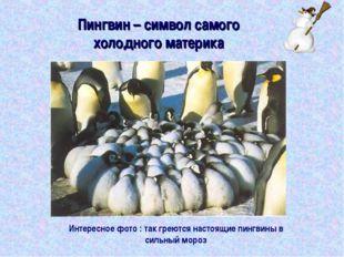 Пингвин – символ самого холодного материка Интересное фото : так греются наст