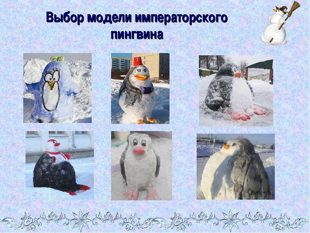 Выбор модели императорского пингвина